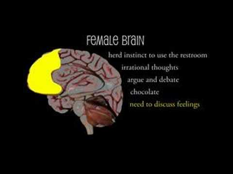 Mens brains vs womens brains funny