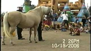texlavallee, smart horse, trigger, say hello to the publics,