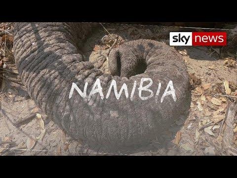 Can killing elephants help save them? | Hotspots