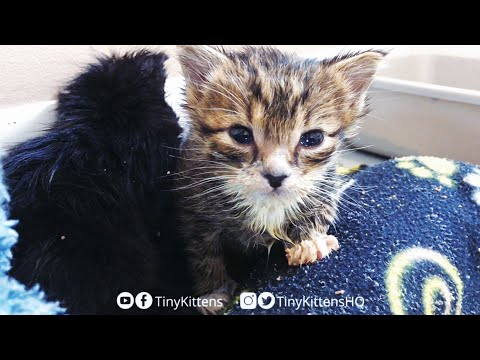 LIVE: Blind Feral Cat Harriet, Mirok And Two Orphan Kittens!  TinyKittens.com