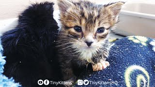 LIVE: Tiny orphan kittens in quarantine - We're #2!  TinyKittens.com