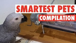 Smartest Pets Ever || Super Smart Pets Compilation