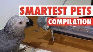 Smartest Pets Ever || Super Smart Pets Compilation