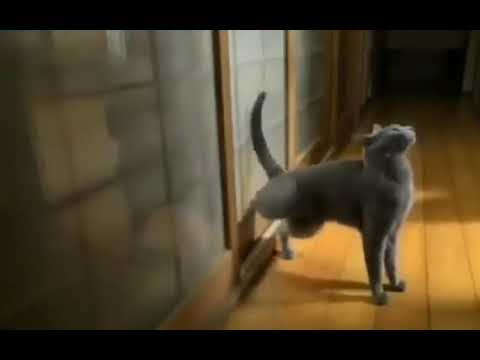 Cats Knocking door