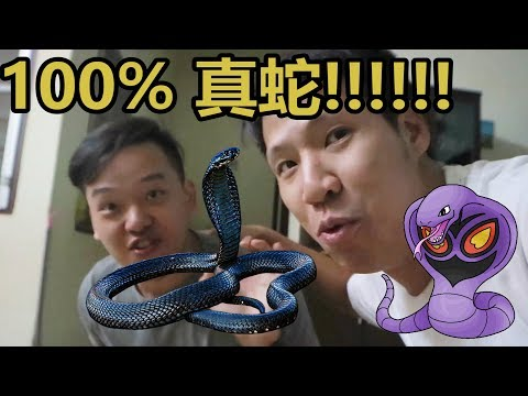 ADVENTURES WITH DENNIS AND PANG - 眼睛蛇出现在我家 COBRA & BOMBA (不需要感叹号)