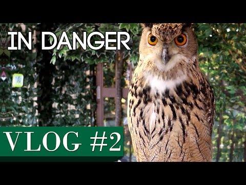 VLOG #2 - Am I In Danger?