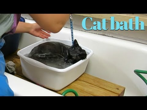 Bathing a cat that hates water and after bath groom