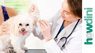 How To Take Care Of A Puppy: Your Dog's First Vet Appointment