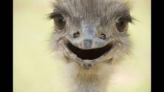 29 fotos de animales mas felices que te contagiaran una sonrisa