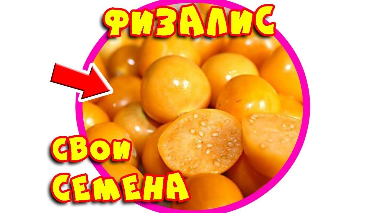 Лучшие семена томатов от компании СЕДЕК - YouTube