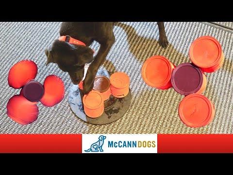 Dog Fidget Spinner DIY!