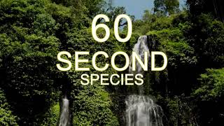 60 Second Species