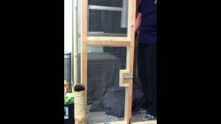 Transferring Feral Kittens From Traps To A Wire Dog Kennel.