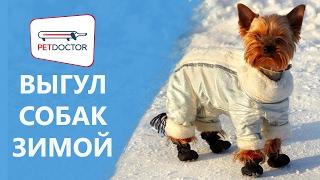 Выгул собак зимой. Рекомендации ветеринарного врача PETDOCTOR
