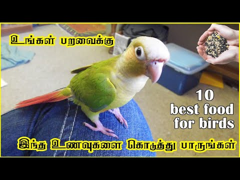 Best Food For All Birds in Tamil   Fewminutes