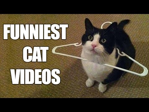 Thumbnail: Funny Cats Compilation [MUST SEE] Funny Cat Videos 2016
