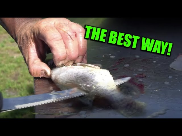 The BEST WAY to FILLET Crappies!!!
