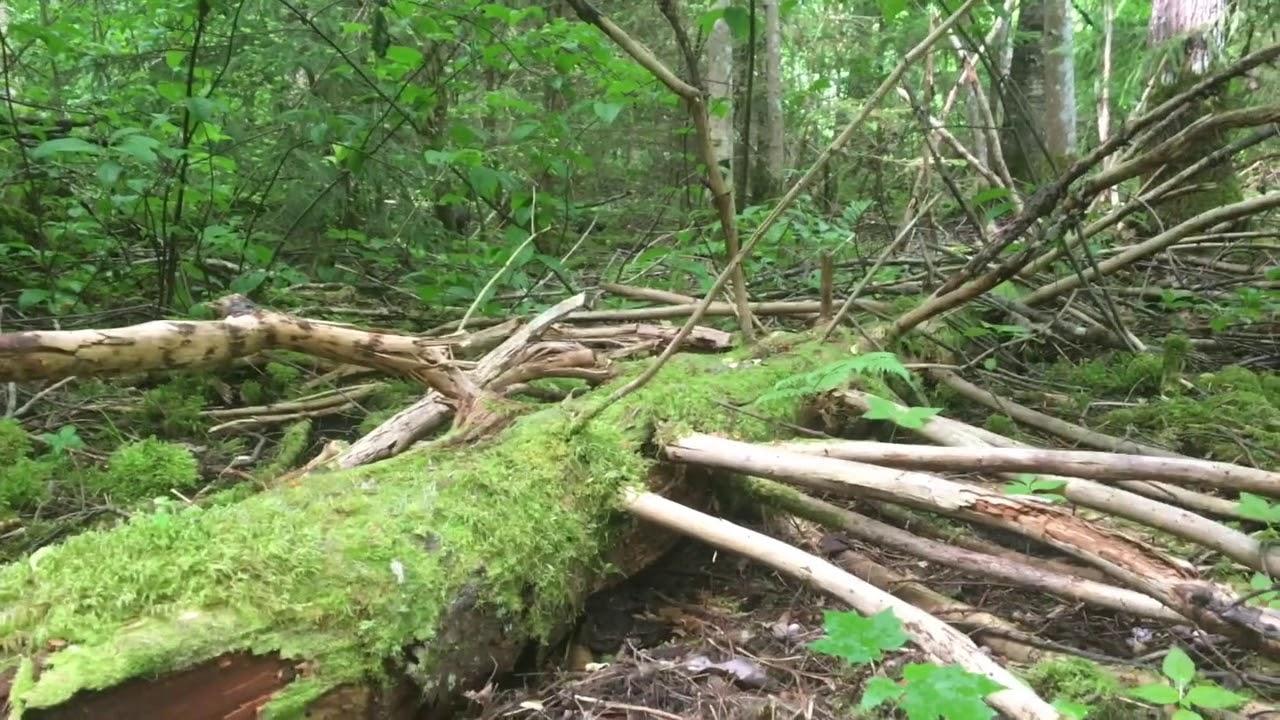Filosofía en el bosque 19. Neuroartes y literatura