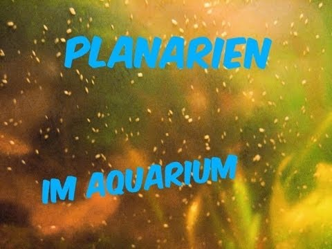planarien im aquarium mein aquarium 43 youtube. Black Bedroom Furniture Sets. Home Design Ideas