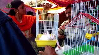 RABBIT, HAMSTER, GUINEA PIG SELLER OF GALIFF STREET MARKET KOLKATA INDIA | 2ND SEP 2018 VISIT