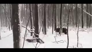 Охотничьи байки   Истории из леса   Подборка №1