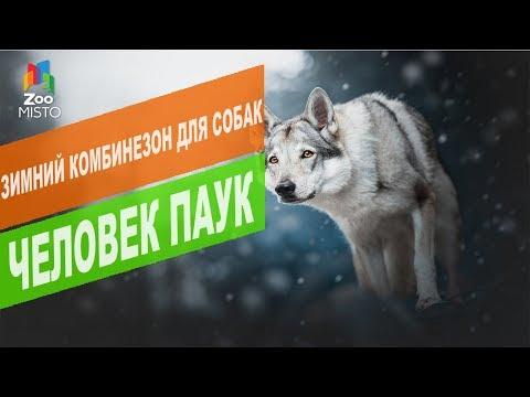 Зимний комбинезон для собак Человек паук | Обзор зимнего комбинезона для собак Человек паук