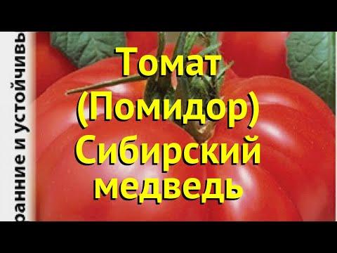 Томат обыкновенный. Краткий обзор, описание характеристик, где купить семена Сибирский медведь