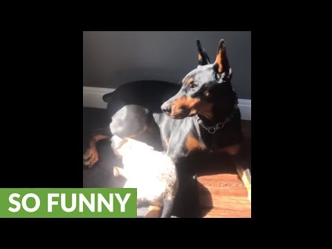Dog and cat's precious reunion after being separated