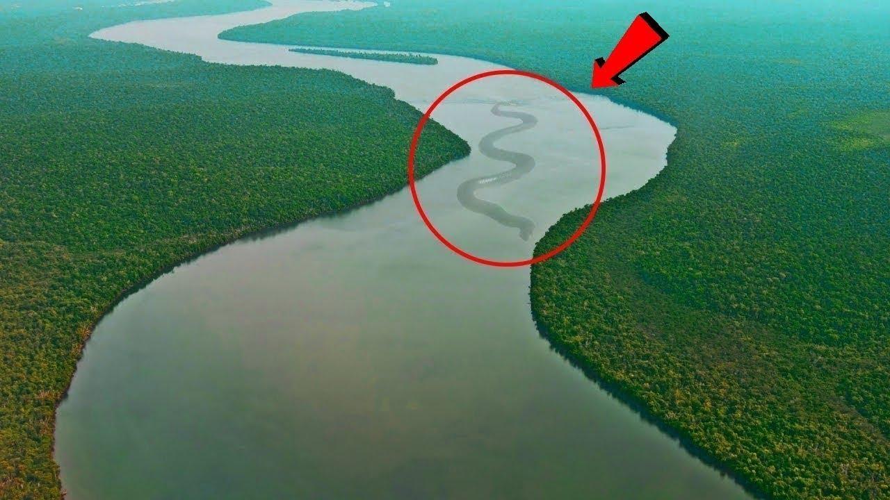 Download 10 Most Dangerous Animals of Amazon Rainforests