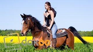 Fachpraktiker der Pferdewirtschaft - Sie füttern, misten und trainieren | kurz Doku