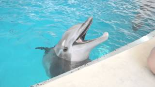 Dolphin High Pitch Squeaks