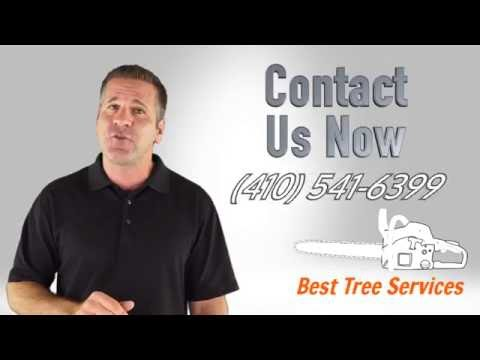 Best Tree Services Website for Sale or Lease