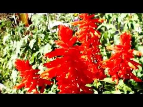 В платье Красные цветы