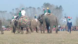 Download Video Elephant game at chitwan Nepal MP3 3GP MP4