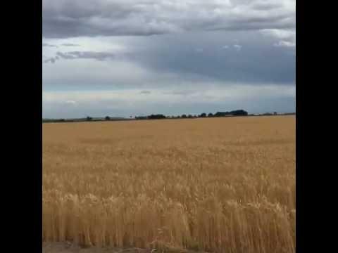 Corn is the best crop & wheat is worst