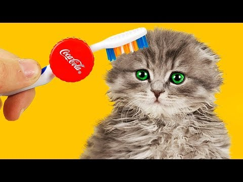 7 LIFE HACKS FOR CAT!