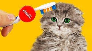 7 LIFE HACKS FOR CAT!