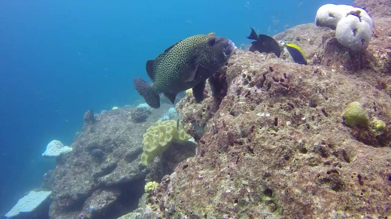 Maldive Diving Comp 2016 Reethi Beach Resort