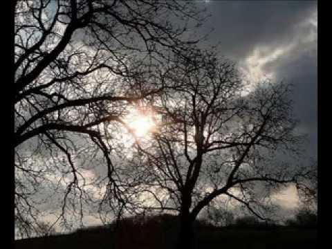Copacii fara padure Tatiana Stepa
