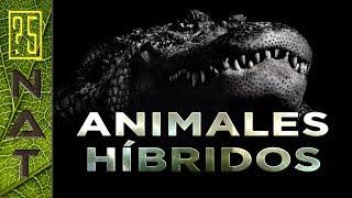 [NAT] Animales Híbridos Genéticos Naturales