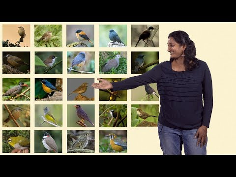 Uma Ramakrishnan (NCBS) 2: Biogeography and Speciation in Indian mountain ranges