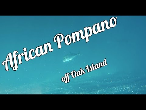 African Pompano Offshore Fishing | KayakingSazzles