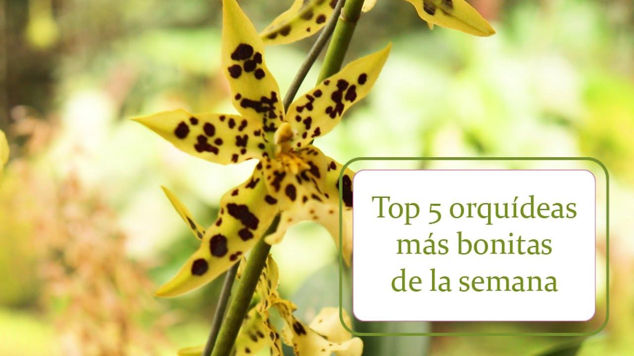 Top 5 orquídeas más bonitas de la semana   Alma del Bosque