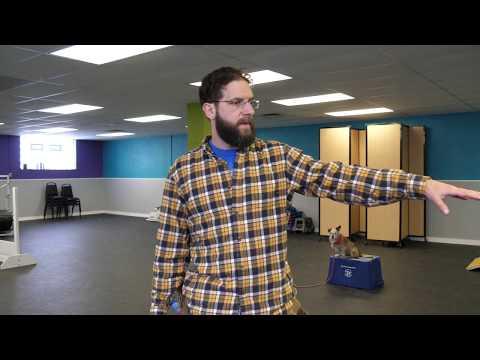 Dominic Day 7 Of Aggression Rehabilitation | K9 Connection Dog Training Buffalo NY