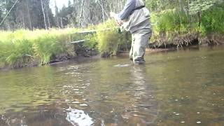 Silver Tip Fly Company Arctic Grayling Fishing