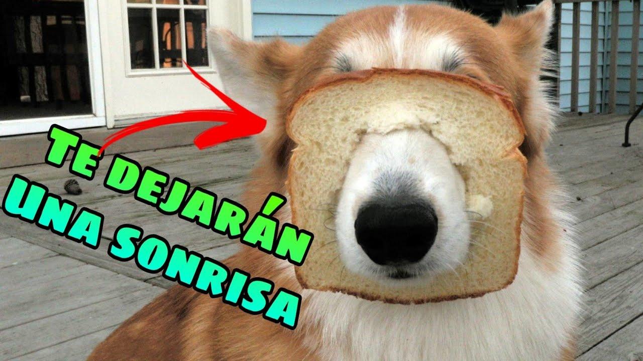 🤣 Animales que te Curan la Depresión 🐱🐶 Mascotas Chistosas para Reír