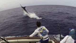 Fighting Blue Marlin 1075 lbs Grander! Amazing jumps!