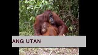 Media Pembelajaran IPS 2011 UNJ: Persebaran Fauna di Indonesia