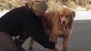 Впервые собаке надели ботинки