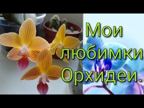 #орхидеи#комнатныецветы#цветоводство Мои любимки Орхидеи. Видео N. 1